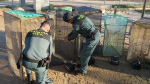 Imatge dels 'bussons' decomissats per la Guàrdia Civil a Deltebre