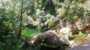 La nova central de biomassa tindrà una afectació directa i positiva en el medi ambient i en la conservació de l'entorn d'Alcover.