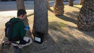 L'endoteràpia vegetal s'aplica arbre per arbre de manera individualitzada