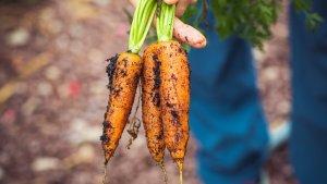 Los alimentos orgánicos son aquellos que se encuentran libre de agentes químicos, como pesticidas.