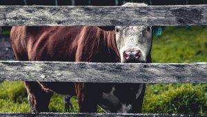 Ser vegano no se reduce al rechazo de alimentos de origen animal.