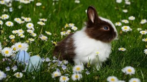 Those born in the year of the rabbit have a highly refined personality.