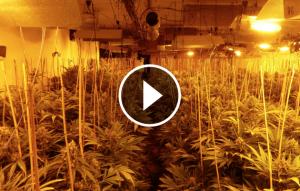 Un agent dels Mossos d'Esquadra al fons d'una de les plantacions de marihuana de Mataró.