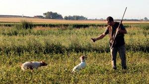 Un caçador recollint una guatlla que li ha cobrat el seu gos
