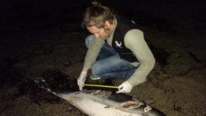 Un membre d'Equinac atenent el dofí mort