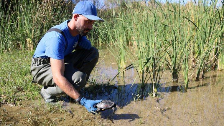 Alliberament d'una tortuga autóctona a l'estany de Banyoles