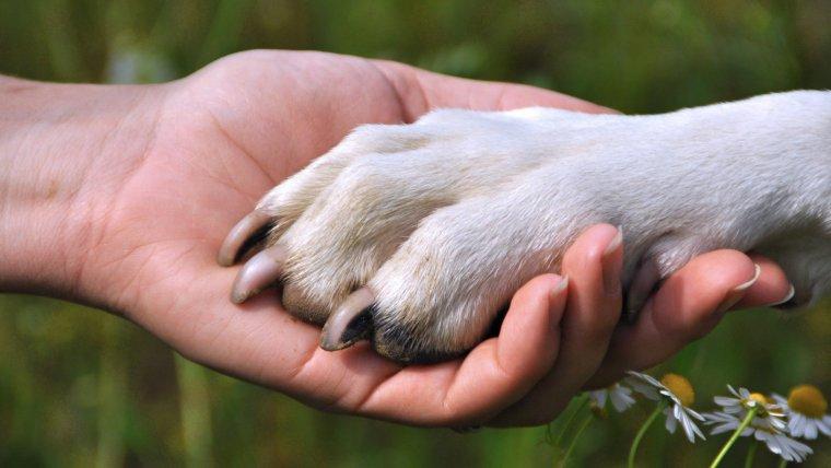 Es referma el tòpic que el gos és el millor amic de l'home