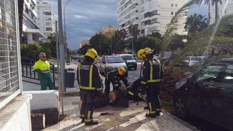 Los Bomberos de Málaga procediendo a talar la palmera caída