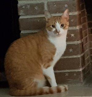 El gat Misha perdut a Serraparera