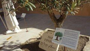 Fins a un total de 13 espècies, presents a la Bíblia, formen el jardí biblic