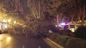 Imatge d'arxiu d'un arbre caigut en la Gran Via Marqués del Túria