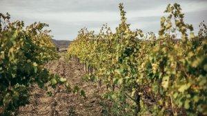Imatge de les vinyes al celler del Priorat