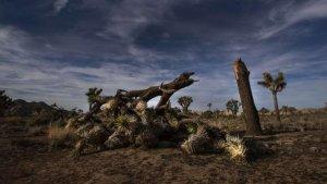 Imatge d'un dels arbres tombats pels vàndals al parc