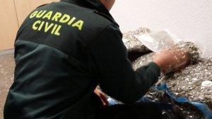 La Guàrdia Civil intervé 30 quilos de marihuana en el terme municipal de Sagunt