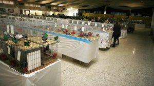 L'Exposició-Concurs internacional d'aus ciutat de Valls es podrà visitar a la Sala Kursaal.