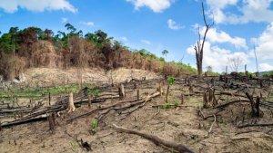 Noruega ha fet història contra la tala d'arbres