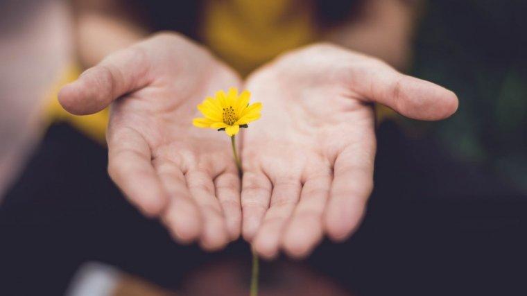 7 Cartas Para Pedir Perdón Bonitas Y Románticas