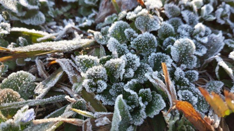 El fred intens arriba aquest dijous