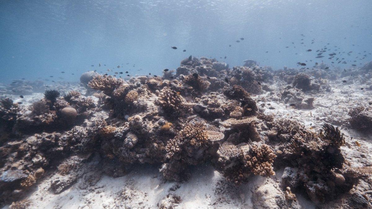 Ecosistemas Qué Son Los 9 Tipos Terrestres Y Acuáticos