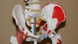 Los síntomas de la osteoporosis afectan a la cadera con frecuencia.