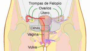 Cáncer de útero/endometrio