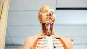 Conocemos qué es el cáncer de garganta, sus síntomas y tipos.