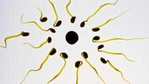 El ciclo menstrual tiene 4 fases: preovulación, ovulación, postovulación y sangrado.