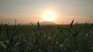 El sol continuarà dominant arreu aquest dilluns