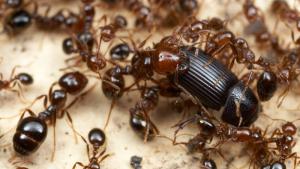 Els insectes poden desaparèixer en 100 anys