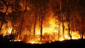 Este año está siendo especialmente bueno en lo que hace a los pocos incendios forestales