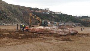 Imagen de la ballena varana en Vizcaya
