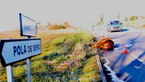 Imagen del accidente provocado por el caballo escapado en Siero