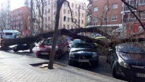 Imagen del árbol caído en la calle Embajadores, Madrid