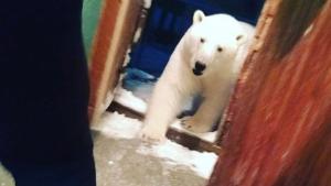 Imagen tomada por una persona de un oso en una vivienda