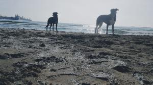 Imatge de les boles de polietilè a la platja dels Prats de Vila-seca
