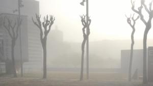 La boira ha estat present en diferents punta de la ciutat de Tarragona