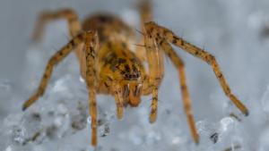 Las fobias específicas incluyen el miedo excesivo a las arañas y otros animales.