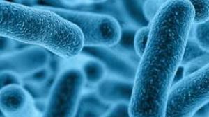 Los afectados en 2018 por esta esta bacteria fueron del 5 por 100.000 habitantes