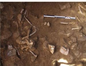 Restes d'un gos adult (superior) i d'un gos i un humà en tombes properes a Barcelona