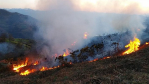 Varios incendios forestales queman en Asturias desde el fin de semana