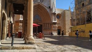 Centenars de paneroles han aparegut aquesta setmana al Pla de la Seu de Tarragona.