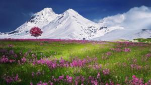 El temps de primavera s'imposarà aquest març i els models estacionaris diuen que no refrescarà