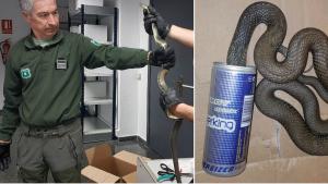 Els agents rurals del Baix Penedès van alliberar a la serp de la llauna