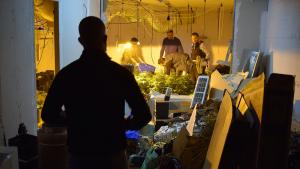 Els lladres van assaltar l'habitatge amb la voluntat d'apropiar-se d'una plantació 'indoor' de marihuana