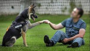 Grupo canino de la Guardia Civil