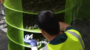 Imatge de la plantació 'indoor' de marihuana desmantellada per la Guàrdia Civil, a Alcanar