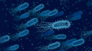 La amoxicilina actúa junto con el ácido clavulánico para combatir bacterias como el Heliobacter pylori.