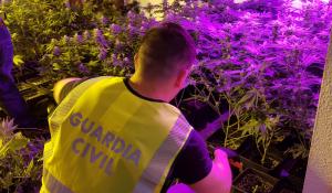 La Guàrdia Civil desmantella una plantació de marihuana a Alcanar