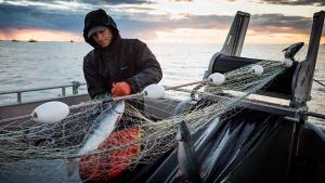 La pesca ha baixat molt a les costes ibèriques pel canvi climàtic
