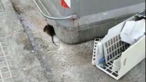 Les rates han aparegut en els últims dies a diferents carrers del barri tarragoní de Bonavista.